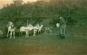 1952 - Hier ging es darum welcher Ziegenbock ist der Schnellste