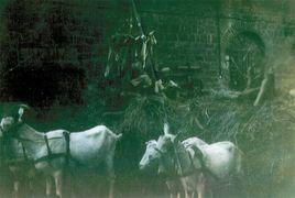 1951 - Getreideernte mit einer Erntekrone