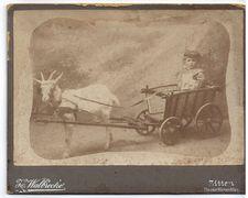 Fotoatelier Walbrecker - Zittan - ca.1884 - 1919